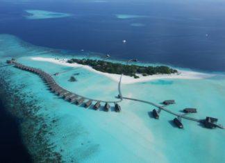 Cocoa Maldivy
