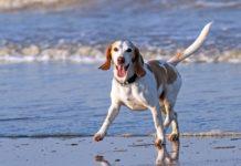 Psie plaze